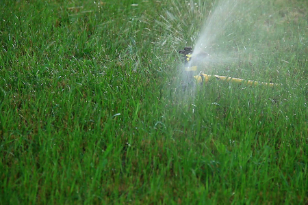 Sprinkler head irrigates the grass