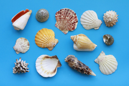 Many different seashells on blue background