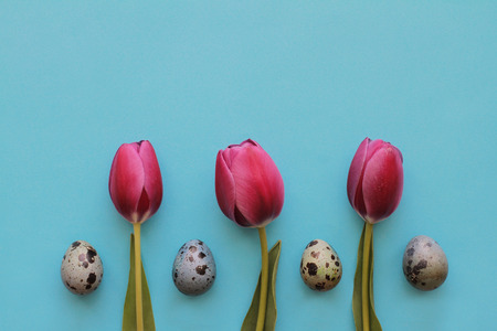 Tasty pink tulips and quail eggs on a blue background for Easter 写真素材