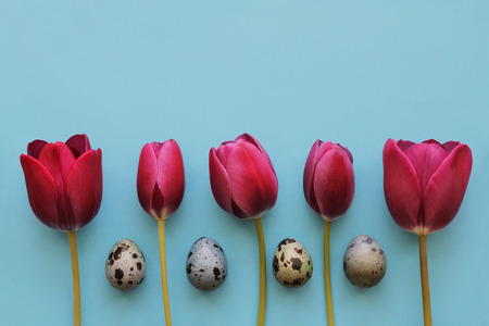Saturated pink tulips and quail eggs alternate on a blue background for Easter