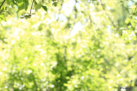 Trees with bokeh light background in bright summer day, use for background 写真素材