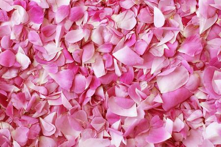 Petals of tea pink roses background