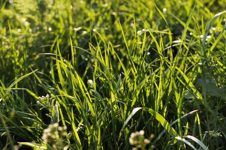 Green fresh grass full frame, used as background Banco de Imagens