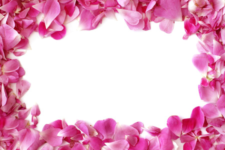Frame from pink rose petals with place for test or photo