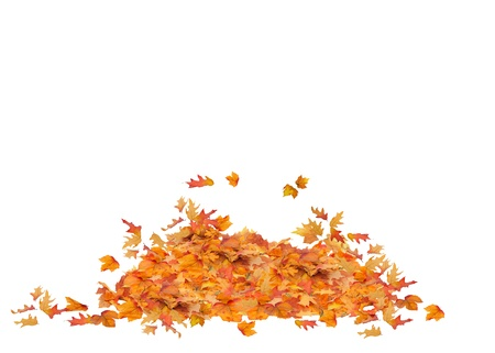 pile: Pile of Fall Leaves Isolated, orange, red, yellow, and brown colors Leaf Pile