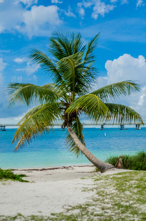 Palm Tree in front of Caribbean Sea photo