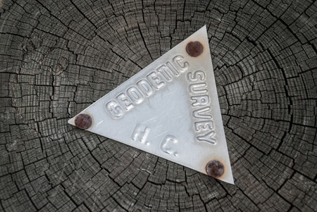 geodetic: A metal geodetic survey sign is nailed to a tree trunk in North Carolina