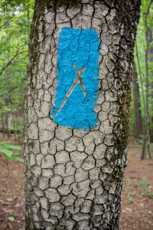x marks the spot: A painted blue blaze marks a trail through the woods in the foothills of South Carolina