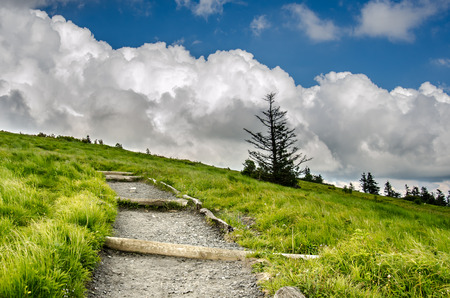 A gravel and dirt trail winds up Round Bald near Roan Mountain