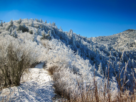 The Appalachian Trail near Charlie
