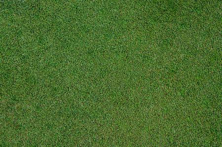 cut grass: A image of golf fringe grass