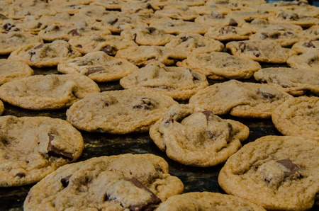 dozens: Homemade chocolate chip cookies spread out to cool on a granite countertop Stock Photo