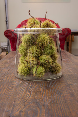 Green chestnut seed pods sit in a glass jar on a wooden coffee table photo