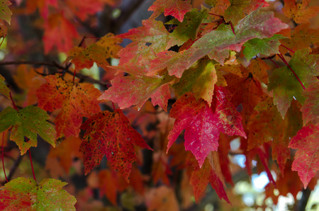 Leaves turn red and orange in fall