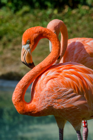 ess: Pink flamingos with necks arched into an infinity sign