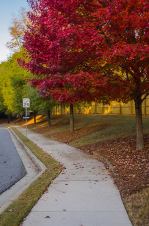 suburban neighborhood: Leaves turn red along the sidewalk of a suburban neighborhood