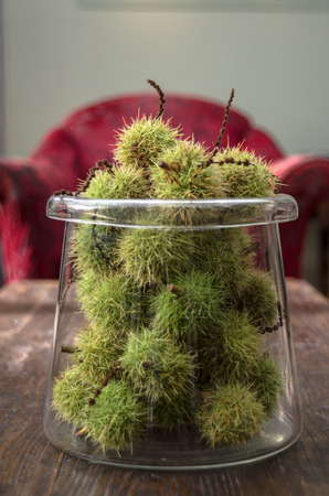 Green chestnut seed pods in a glass jar on a coffee table photo