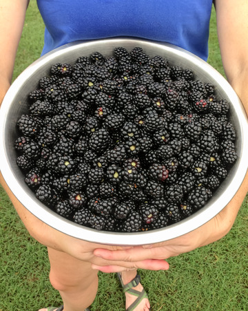 A woman holds a large bucket of freshly picked blackberries photo