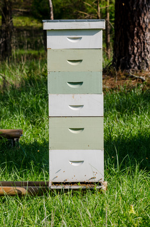 Bees fly in through the bottom of a stack of beekeeping boxes Stock Photo