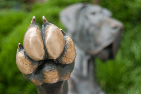 A close up of a paw offering a high five