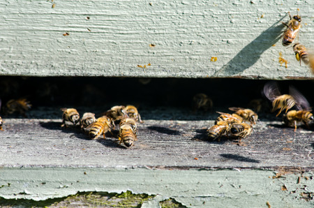 Bees enter a beekeeping hive through a slit in a stack of wooden boxes Stock Photo
