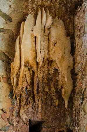 Une grande ruche d'abeilles sur un mur de briques Banque d'images - 39593498