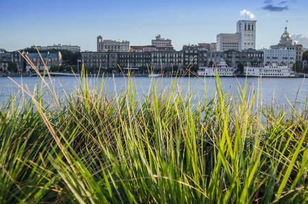 riverfront: Green grasses with the Savannah riverfront blurred in the background