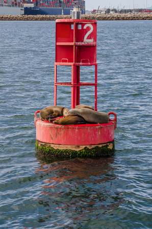 A group of sea lions cuddle while sunbathing in a harbor in California