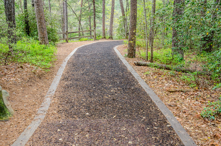 walking path: A soft walking path in a state park in Georgia