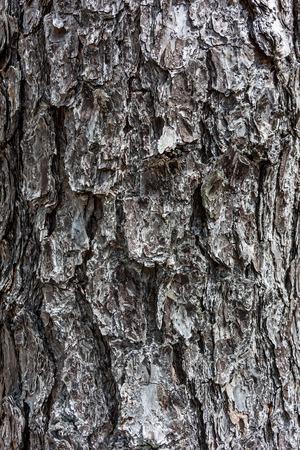 multi layered effect: A background image of pine tree bark Stock Photo
