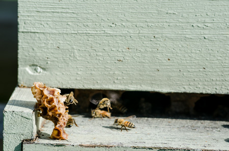 Pieces of beeswax sit on the ledge to a beekeeping box