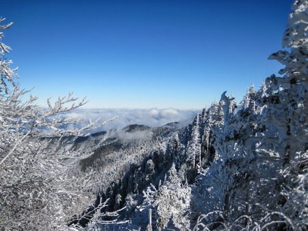 Trees covered in snow and ice along the Appalachian Trail in Great Smoky Mountain National Park