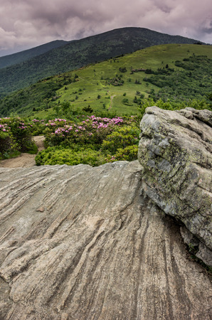 appalachian trail: Rhododendron bloom along the Appalachian Trail as it leaves a rock outcropping on Jane Bald for Round Bald with Roan Mountain in the distance