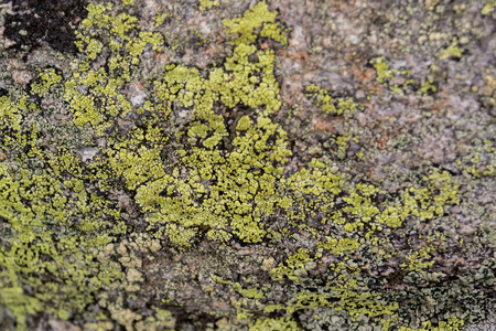 rock texture: Green lichen growing on a boulder