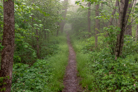 appalachian trail: The Appalachian trail cuts through foggy woods in Shenandoah National Park