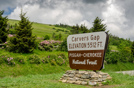 appalachian trail sign: Carvers Gap is lush with pink and purple rhododendron in mid June each year
