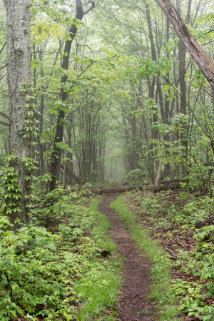 appalachian trail: A smooth section of Appalachian Trail winds through Shenandoah National Park