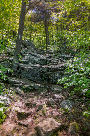 appalachian trail: Large rocks on the Appalachian Trail through the Great Smoky Mountain National Park Stock Photo