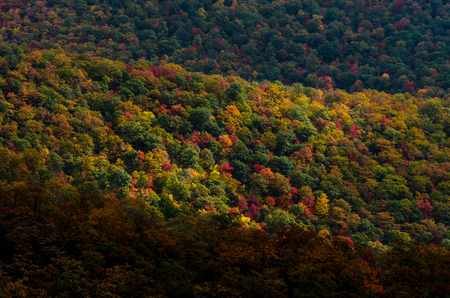 ridges: Mountain ridges covered in leaves changing to red, orange,a nd yellow in fall