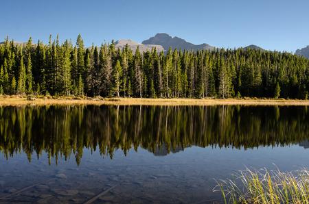 オデッサ コロラド山中湖