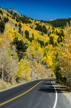 winding up: Winding up a mountain road in fall with the slope covered in yellow aspens Stock Photo