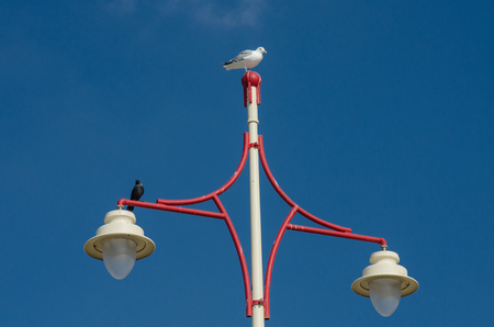 lamp post: A seagull rests on top of a red and white lamp post
