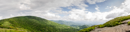 roan: Bright greens in the Roan Mountain highlands in early June