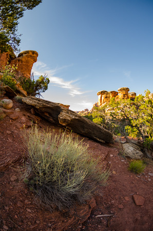 canyonlands national park: Sagebrush in the desert of Canyonlands National Park near Chesler Park Stock Photo