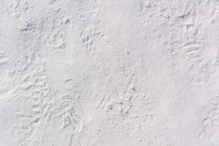 packed: Footprints in packed snow make a wintery background image