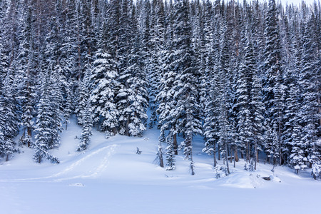 dream lake: Snowy trees line Dream Lake in winter accessible only by snow shoe or cross country skis