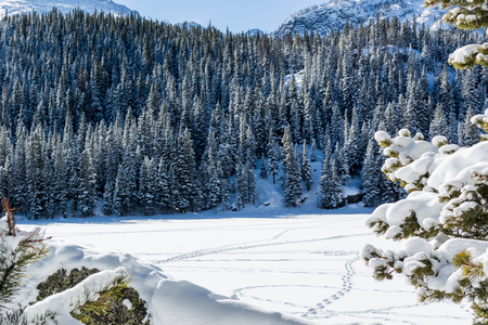dream lake: Snowy pine trees border snow covered lake high in the Rocky Mountains Stock Photo