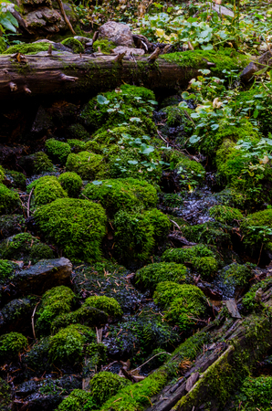 alongside: Moss and ferns in Colorado mountains alongside a hiking trail