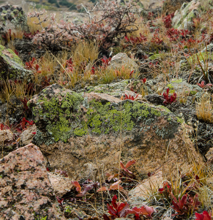 brush in: Lichen on rock and red brush in Colorado mountain wilderness
