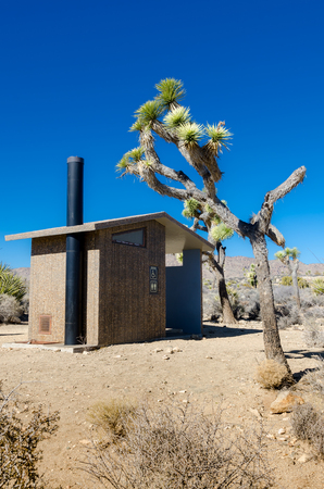 roughing: Desert privy vertical with joshua tree on a blue sky day Stock Photo